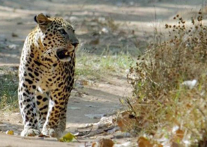 Kumbhalgarh-wildlife-Sanctuary